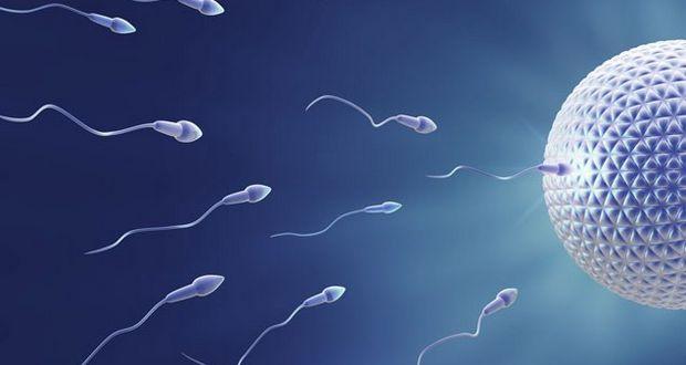 sperm-race-to-the-egg-tiny-girl-sex-tube