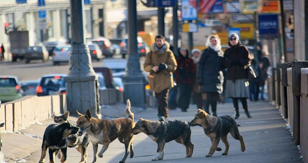 Moscow Street Dogs