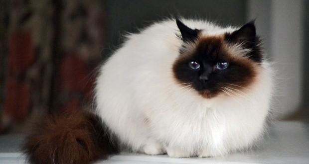 Cat Domestication