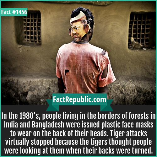 1456. Tiger Attack Masks-In the 1980's, people living in the borders of forests in India and Bangladesh were issued plastic face masks to wear on the back of their heads. Tiger attacks virtually stopped because the tigers thought people were looking at them when their backs were turned.