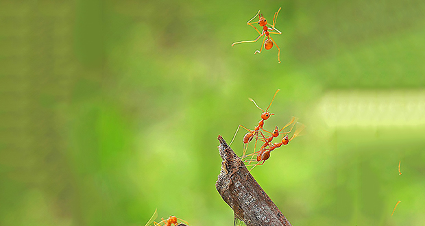 Ants fall