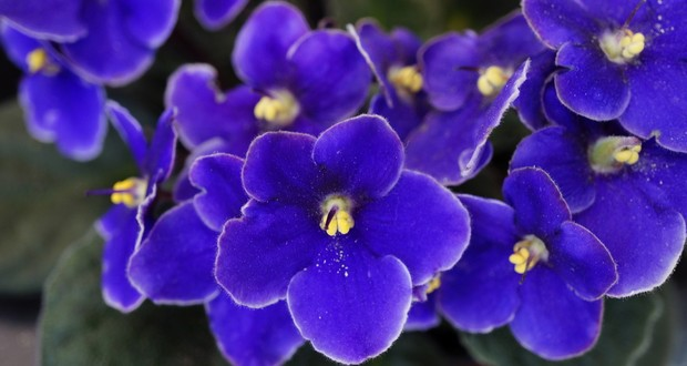 50 Weird And Interesting Facts About Plants Fact Republic