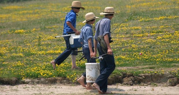 Amish population