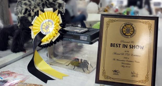 Annual Tarantula Exhibition