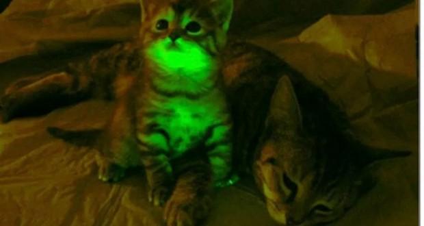 AIDS cat