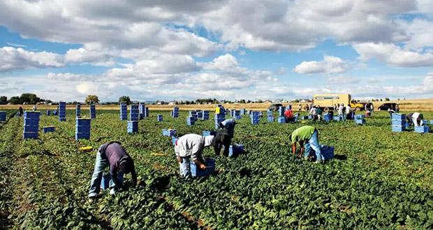 Domestic Farming