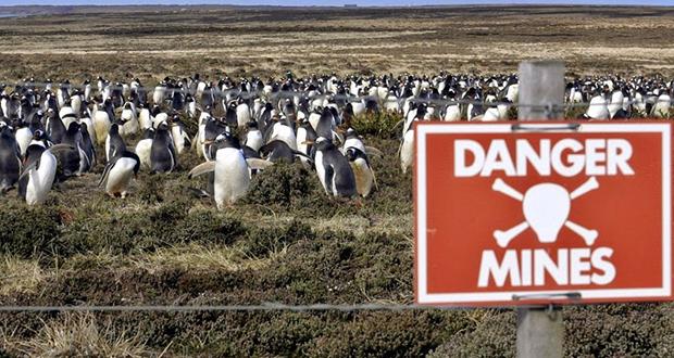 Penguin Falklands War