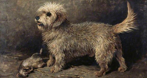 Callum dog