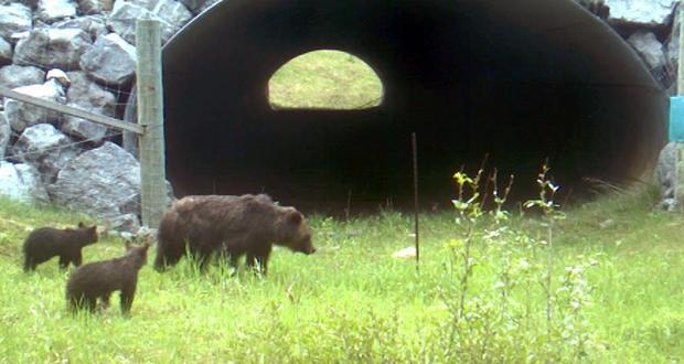 Wildlife tunnels