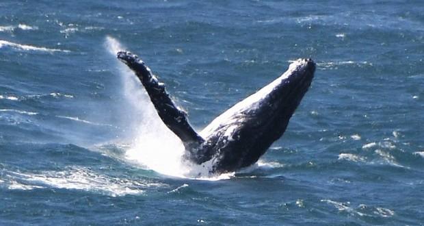 Third Whale