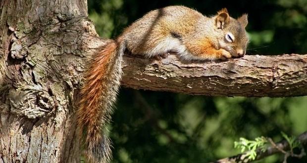 Sleepiest Animals
