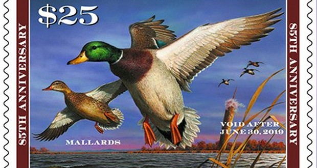 Duck hunting stamp