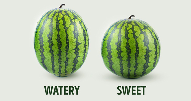 Watermelon gender differentiation