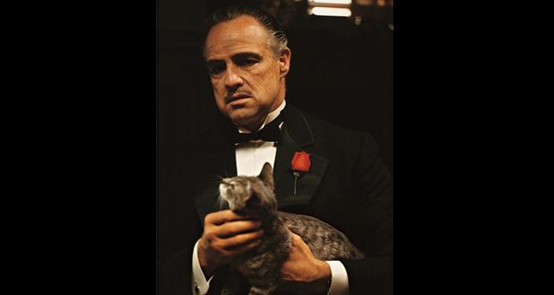 Vito Corleone's cat