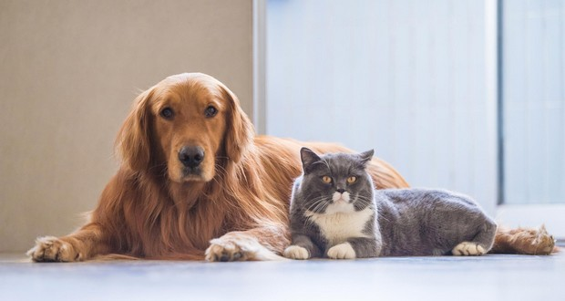 Dog and Cat species