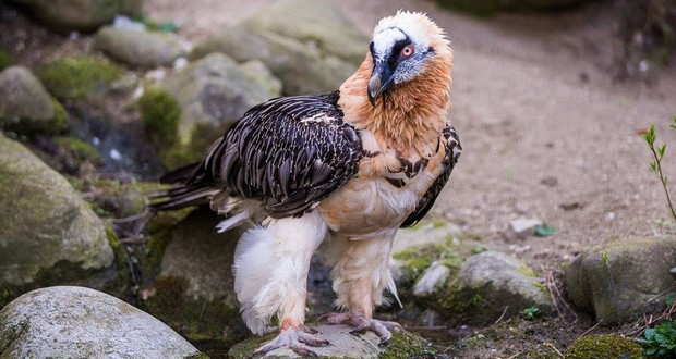 New and Old World vulture
