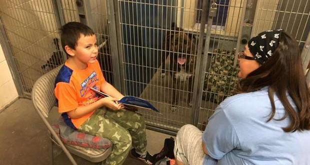 Maricopa animal shelter