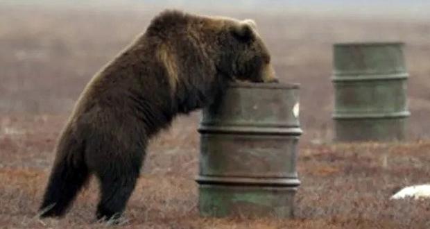 Bear addiction