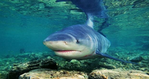 Lake Nicaragua sharks