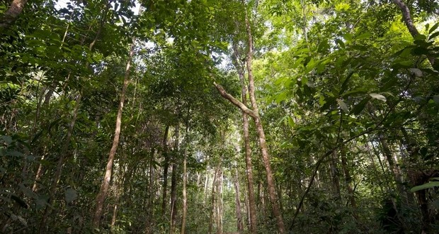 Rainforest canopies
