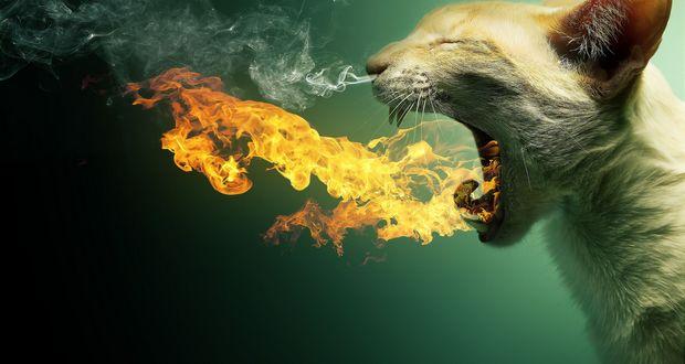 Cat-Burning
