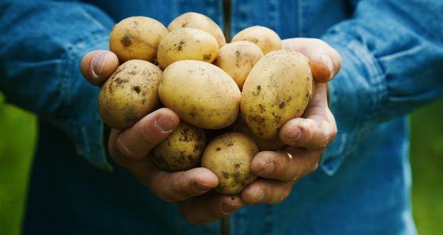 Potato Bribes