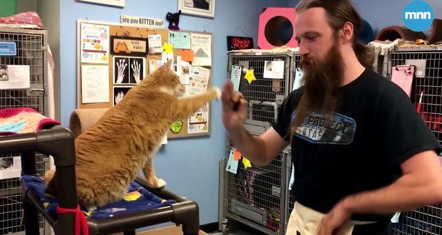 Cat Pawsitive