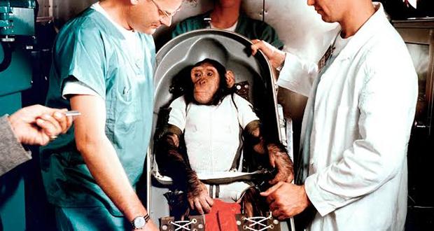 Ham the Chimp