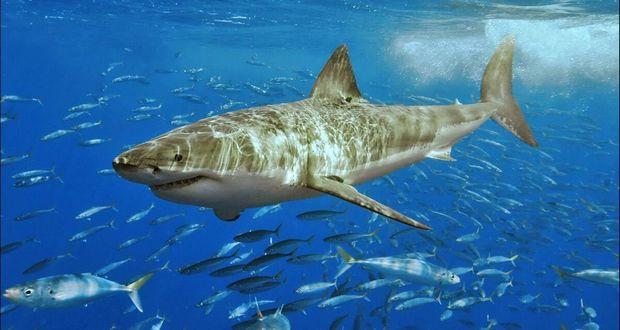 White Shark Cafe