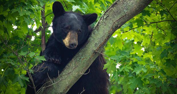 Mink The Bear