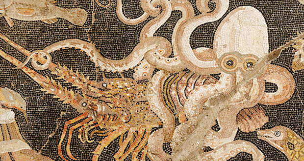 Puteoli Octopus