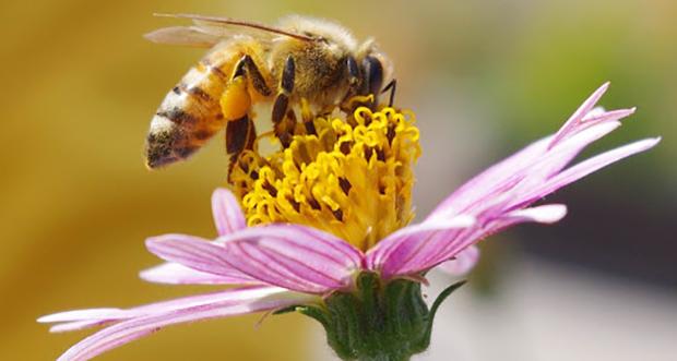 Bees Vision