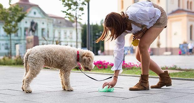 Madrid dog poop