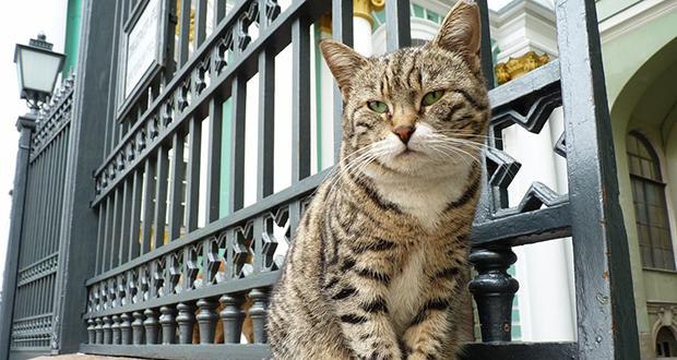 Hermitage Museum cats