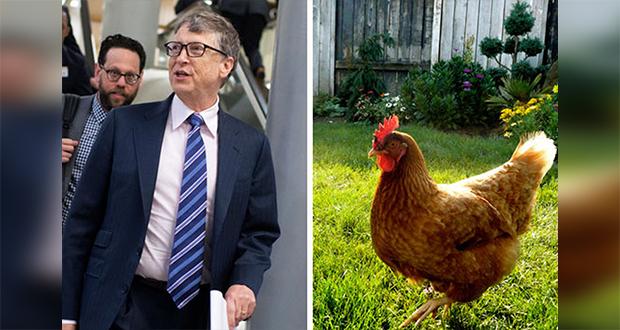 Chicken rejection