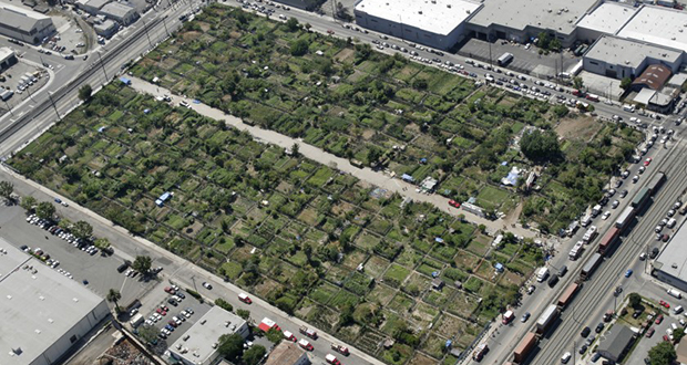 Los Angeles Urban Farm