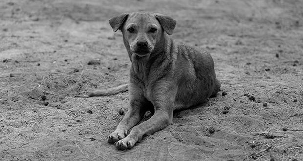 Bombay dog riots
