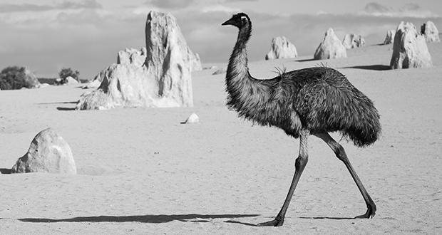 Great Emu War
