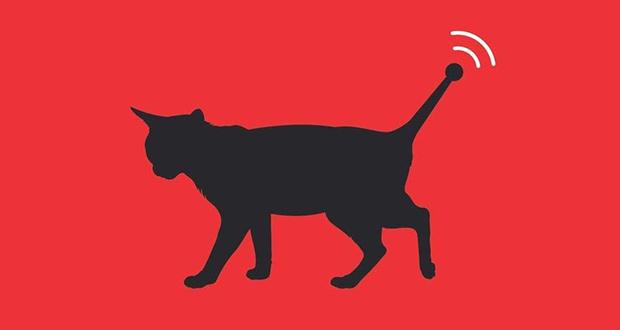 Spy cats