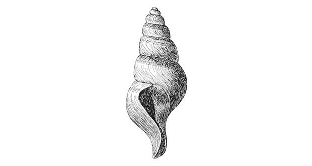 Left-hand side shell