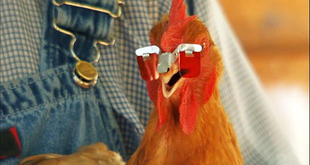 Rose-tinted chicken eyeglasses