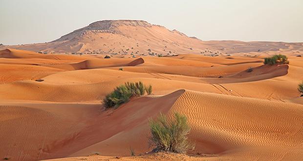 Desert Grasslands