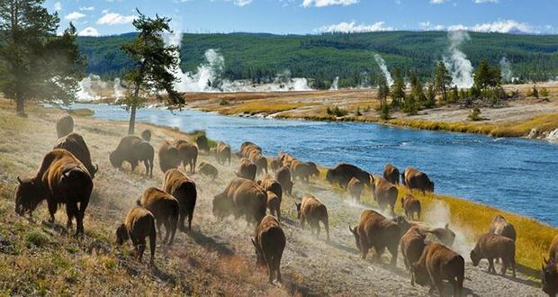 YellowstoneNational Park