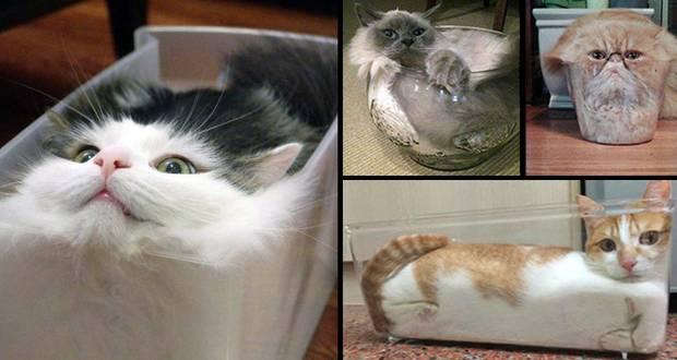 Cat, Liquid or Solid?