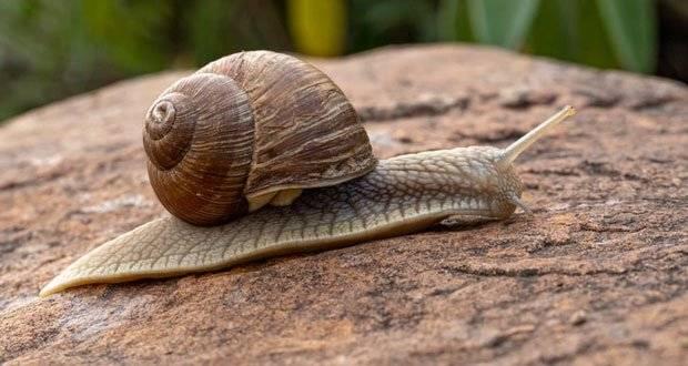 Lifting Snails