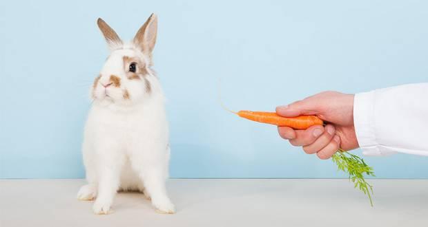 Carrots & Rabbits