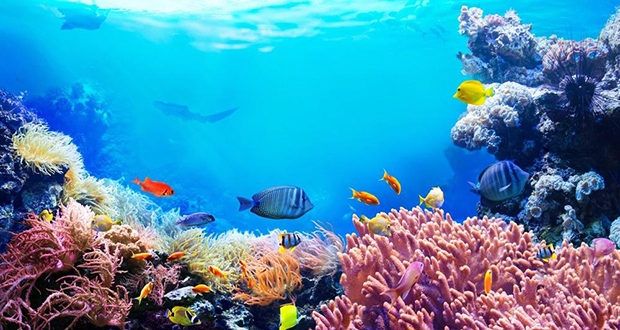 Dying Coral Reefs