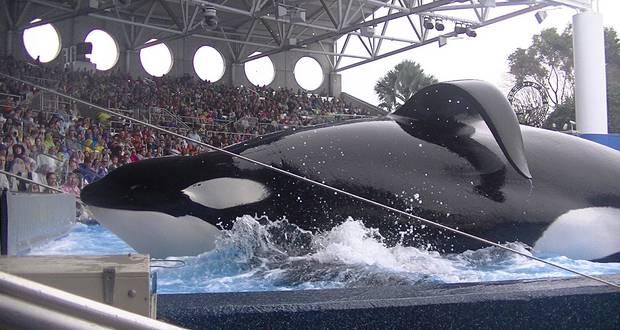 Killer Whale Deaths