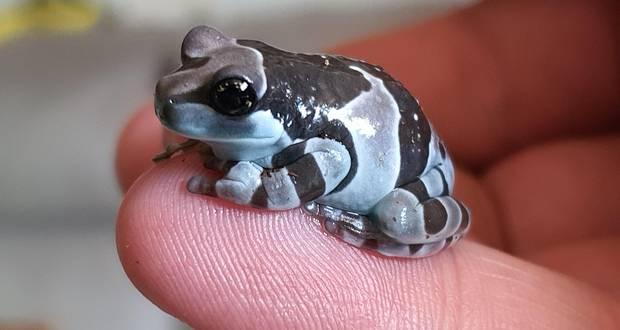Frog in Milk