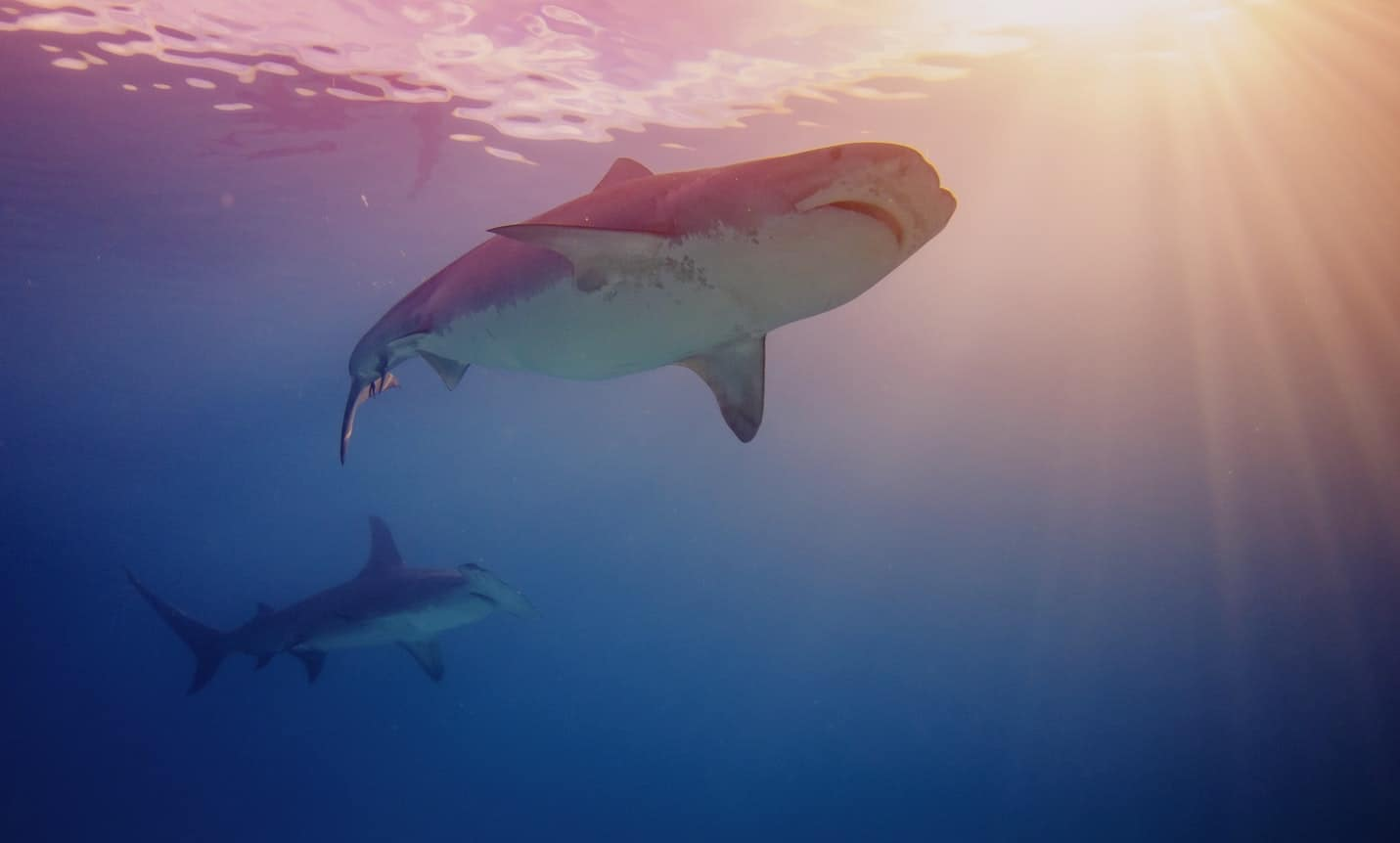 70 Thrilling Shark Facts That Will Surprise You